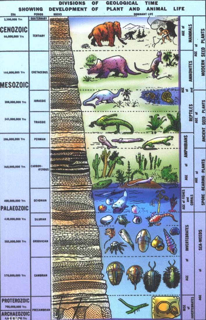 Fossil Record gradual change