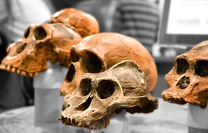 The fossil record supports evolution